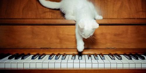 ピアノと猫1.jpg