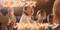 写真:歌って踊れる♪青春ポップス♪TVCM絶賛放映中~!|おとサロンSBS通り